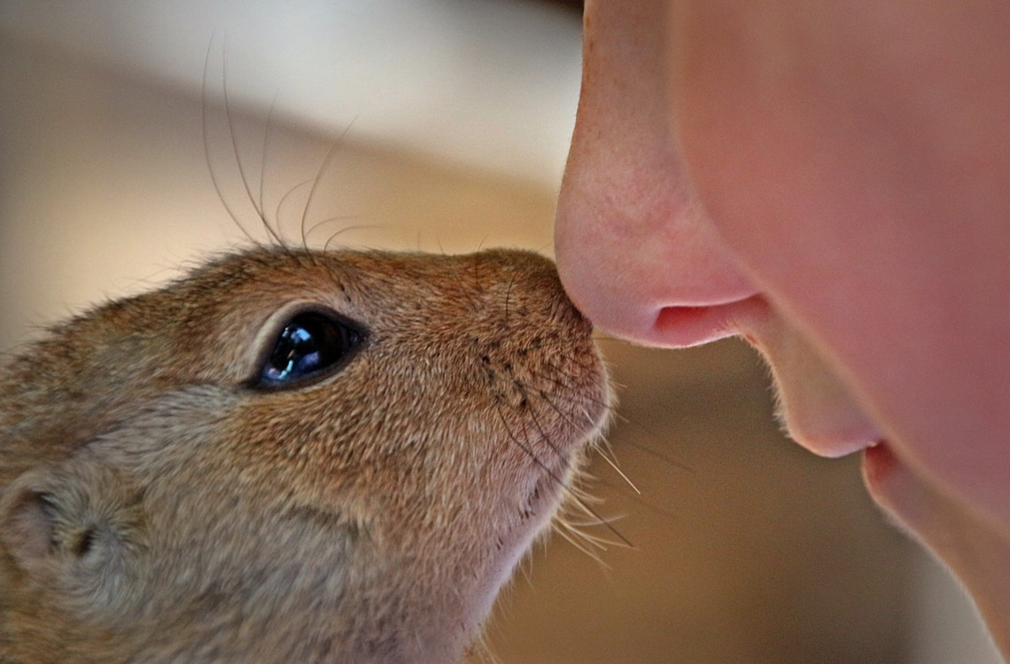African bush squirrel touches noses with a woman