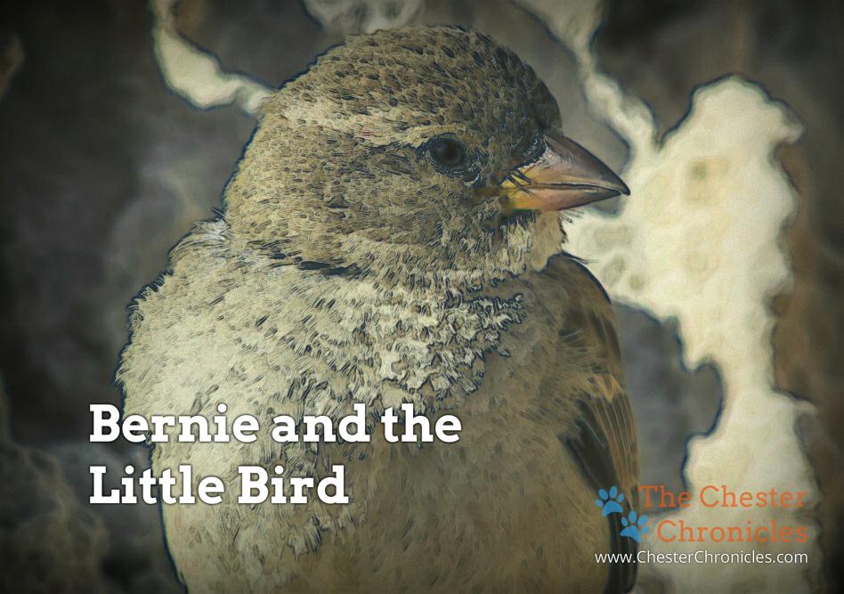 Bernie & the Little Bird