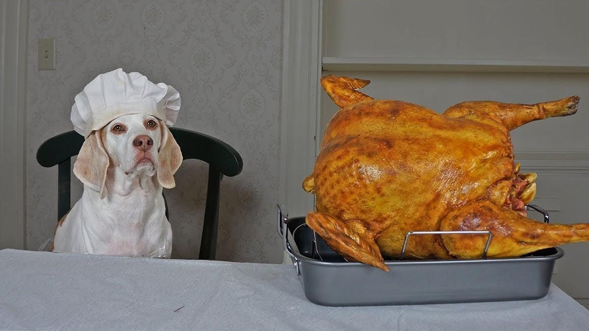 Maymo Dog Cooks Turkey Dinner