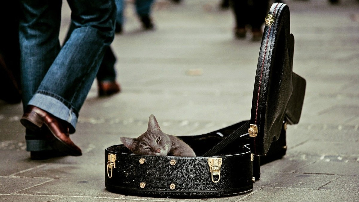 A kitty lounging in an open guitar case