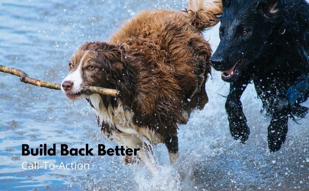 Friends in action, dogs bounding through water with a stick.